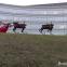 ギリギリですが。クリスマスのロボット・ビデオ