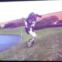 ボストン・ダイナミクス社の新しいロボット『ハンドル』、初公開ビデオ